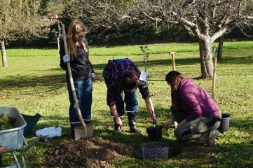 LFS Buchhof Apfelbäume pflanzen