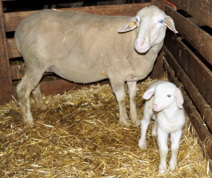 LFS Buchhof Landwirtschaftspraxis